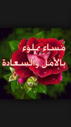 10 Arabic Good Evening Ideas Good Evening Good Morning Good Night Good Morning Arabic