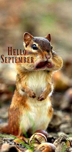 ❈Téa Tosh❈Hello September! It is nut savin' time!