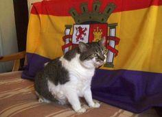 Carmen Marañón Peña, nos manda esta foto de la gatita Ally.