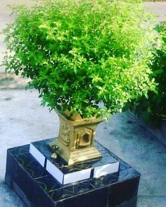 Best Garden Decorations Tips and Tricks You Need to Know - Modern Indian Home Design, Indian Home Decor, Tulasi Plant, Mandir Design, Pooja Mandir, Pooja Room Door Design, Indian Interiors, Temple Design, Puja Room