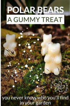 Coconut Milk Gummy Bears, plus 5 other low or no added sugar recipes for fun gummy bear treats.