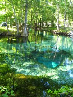 Turquoise Pool, Ginnie Springs, Florida So many beautiful places to see. Florida Springs, Florida Usa, Natural Springs In Florida, Florida Moving, Florida Trips, Gainesville Florida, Florida Camping, Florida Home, Oh The Places You'll Go
