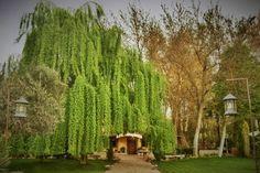 tu boda en el bosque encantado de Madrid - edisee - edisee Madrid, Cactus Plants, Haunted Forest, Naturaleza, Cacti, Cactus