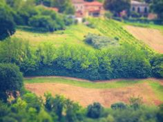 Ancona, Marche, Italy - Trees in the countryside- miniature4 - by Gianni Del Bufalo CC BY-NC-SA by gianni del bufalo