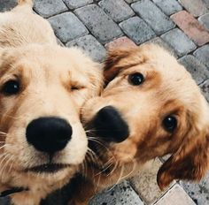 ☆ Follow us @popcherryau for more cute animals ☆ puppies // adorable // cuteness // besties