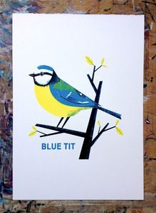 Image of Blue Tit - quite a nice easy block colour image that could front an artistic magazine.