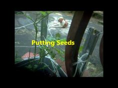 Putting seeds