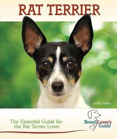 Rat Terrier: A Practical Guide for the Rat Terrier Lover