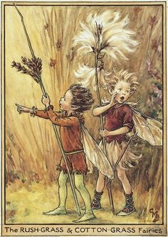 Illustration for the Rush-Grass and Cotton Grass Fairies from Flower Fairies of the Winter. Two boy fairies walk from left to right; the Rush-Grass Fairy is in front, pointing with his right hand and holding a grass in the other. The Cotton-Grass Fairy tu    Author / Illustrator  Cicely Mary Barker