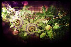 ...fiore spaziale...