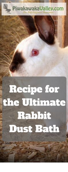 Did you know rabbits like a dust bath? They use it to naturally repel fleas, mites, ticks and lice. This is our own recipe for the Ultimate Rabbit Dust Bath Ultimate Chicken Dust Bath Recipe: 3 Powerful Additions your Chickens will Love Piwakawaka Meat Rabbits Breeds, Raising Rabbits For Meat, Rabbit Breeds, Hatching Chickens, Bath Recipes, Pet Rabbit, House Rabbit, Rabbit Hole, Rabbit Hutches