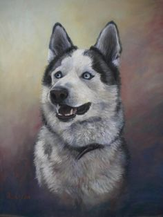 commissioned portrait' pastel 'Dako'.  Huskey. 25 x 19 inches.  sold.