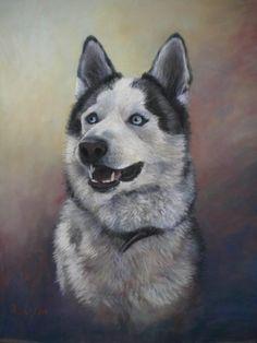 commissioned portrait' pastel 'Dako'.  Huskey. 25 x 19 inches.  sold.