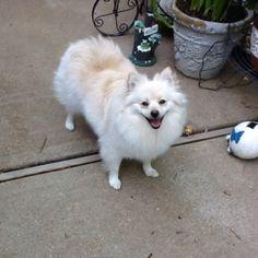 My happy puppy Priscilla