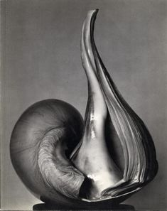 Edward Weston - Conchiglia (1927)