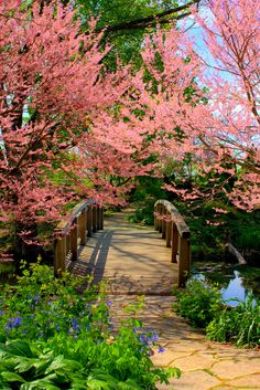 ***Olbrich Gardens bridge in spring (Madison, Wisconsin) by Brian L.