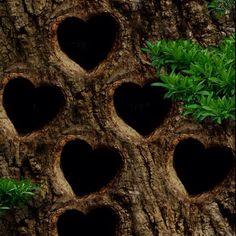 Nature. had hearts