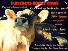 Fun Facts About #Cows