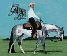 Cameron's daddy...Mackenzies Gallant Jet... love this stud!!