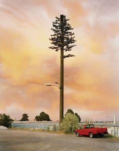 Robert Voit - photographic essay of plastic tree mobile phone towers