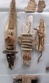 Driftwood and seaweed @Sherri McCombs, I should have gotten more drift wood...