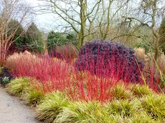 Hillier's beautiful winter garden
