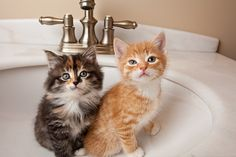 ♥ we are in the bath room . i wonder if theres a fish in the sink.