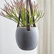 Die 73 besten bilder von inspiration zimmerpflanzen zimmerpflanzen blumen und sukkulenten - Zimmerpflanzen groay ...