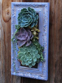 Picture Framed Vertical Garden by SucculentWonderland on Etsy
