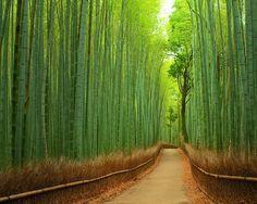 10. Bambou chemin à Kyoto, Japon - 20 arbres magiques Tunnels Vous devriez certainement prendre A Walk Through