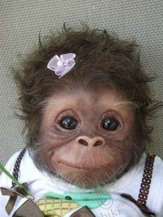 "I keep seeing this as ""Baby monkey"" or ""Cute baby monkey."" -- It definitely is cute, but it's a baby monkey DOLL. This is ""Cookie"" and she's an Amy Ferreira ""Amy's Pipsqueaks"" Reborn doll. (Slide 2 of 19 at the click-through. Cute Baby Animals, Animals And Pets, Funny Animals, Funny Cats, Animal Babies, Animals Photos, Wild Animals, Funny Drunk, Hilarious"