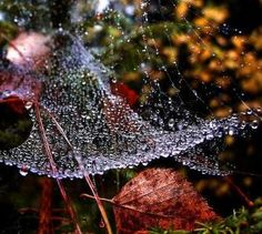 morning fall dew... by christa