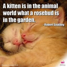 #cute #love #beautiful #nature #animal #animals #wildlife #pets #puppy #dog #kitten #cat #animaltesting #animalliberation #animalwelfare #animalrights #vegan #furfree #goveg #crueltyfree #veganlife #meatismurder #animallovers #vegansofig #animalrescue #sa