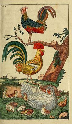 Unterhaltungen aus der Naturgeschichte. [4-5], der Vögel, erster [-zweyter] Theil. T.2