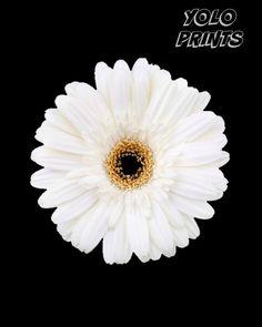 White Daisy Wall Art