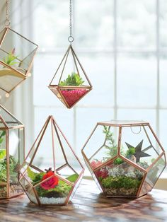 "Prism Terrarium We are want to say thanks if you like to share this post. - ""DIY & Crafts Lovers"" -Hanging Prism Terrarium We are want to say thanks if you like to share this post. Small Terrarium, Terrarium Plants, Succulent Terrarium, Gold Terrarium, Terrarium Wedding, Hanging Glass Terrarium, Indoor Garden, Indoor Plants, Hanging Plants"