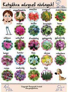 Kutyáknak/kutyákra mérgező növények - gazigazito.hu Dream Garden, Home And Garden, Wallpaper Nature Flowers, Succulents Garden, Good To Know, Animals And Pets, Dog Food Recipes, Herbs, Plants