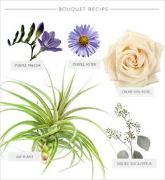 Air plant bouquet