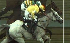 Grand National 2012: a day of drama and despair at Aintree as Neptune Collonges wins race by a nose