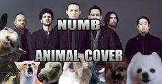 [VIDEO] Des animaux qui chantent Numb de Linkin Park
