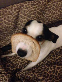 Jack-toast