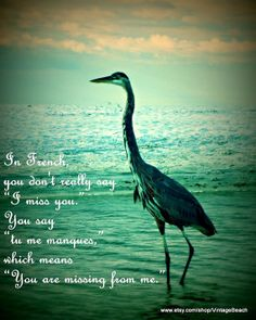 Heron photograph 11x14 Quote  In french you by VintageBeachQuotes, $44.00
