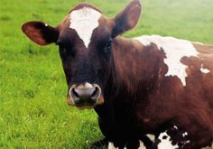What+does+it+mean+to+be+allergic+or+intolerant+to+dairy