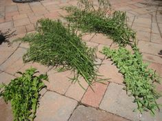 Creating a Kitchen Pharmacy: Traditional Methods of Preserving Homegrown Herbs