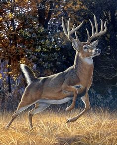 Whitetail Deer Trophy Buck, Startled Buck, Buck & Doe Couple Digitally Printed 100% Cotton Fabric Pa