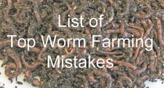 Common worm farming mistakes that put you out of business.