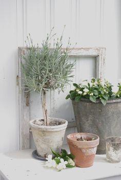 herbs//