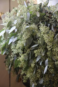 Eucalyptus with berries. I love these and think we should use some of this in your bouquet and with arrangements.