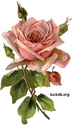 glenda's World : Card and Scrapbook Embellishments by Glenda flowers Card and Scrapbook Embellishments by Glenda Vintage Cards, Vintage Postcards, Vintage Images, Flower Images, Flower Art, Vintage Flowers, Vintage Floral, Vintage Rosen, Card Sentiments