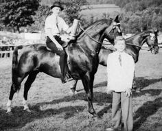 Pony Breeds, Horse Breeds, Morgan Horse, Vintage Horse, Show Horses, Beautiful Horses, Historical Photos, Vintage Images, North America